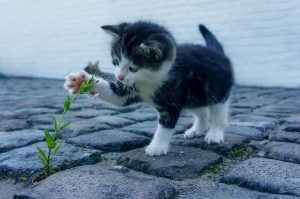 A little kitten playing with a flower.